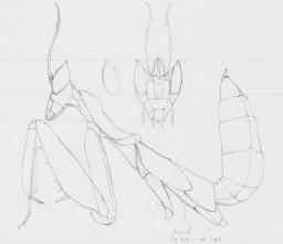 mantis copy